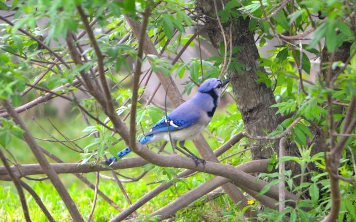 Atraer pájaros salvajes a su patio: Birds.com: Guía de pájaros en línea con hechos, artículos, videos y fotos